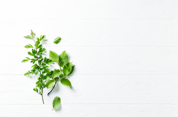 Fresh spring branches on white wooden background