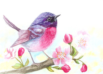 watercolor bird sitting on blossom flowers tree branch