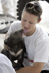 """Kelly Hobs, a staff from the """"Free the Bears Fund"""", plays with a four-month-old black sun bear named Rove in Takeo province"""