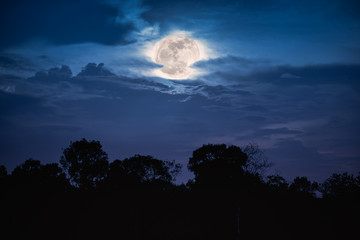 Landscape of trees against night sky with full moon behind clouds over tranquil.