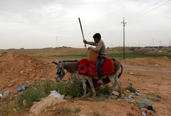 A displaced Iraqi boy rides a donkey carrying aid at Hammam al-Alil camp checkpoint, south of Mosul