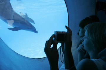 A woman takes a picture of a newborn dolphin swimming in a basin with its mother Liliya in the dolphinarium in Odessa