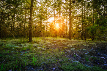 Foto op Canvas Bos Sunset in the forest