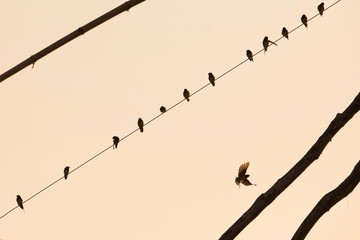 silhouettes of the birds sitting on a wire with sunrise,love and peace concept.