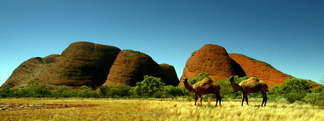 -PHOTO TAKEN 20APR04- Two feral camels stand in front of a group of rock monoliths known as The Olga..