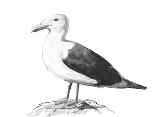 Illustration gulls. Digital painting.