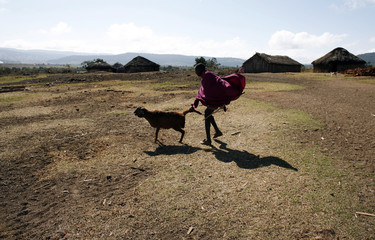 A Maasai man drags a goat away to make room for a rare fertility ceremony in Kisokon village