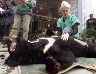 ANIMALS ASIA FOUNDATION'S VETERINARY CHECKS SEDATED ASIATIC BLACK BEARIN CHENGDU.