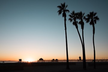 Silhouette of palm trees in Huntington Beach