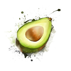 Watercolor illustration of avocado, isolated on white background