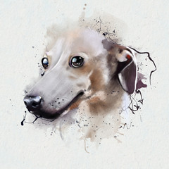 Portrait dog breed Greyhound. A breed of hunting hunting dogs for hunting without a gun (bullying) on animals