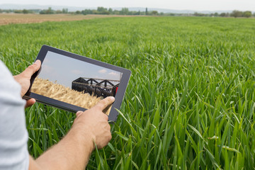 Using tablet on wheat field. Modern Agriculture. Wheat futures concept.