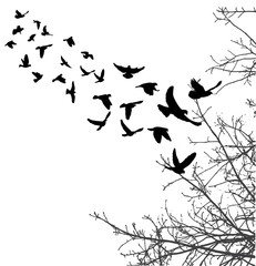 silhouette of flying birds and tree branches, freedom