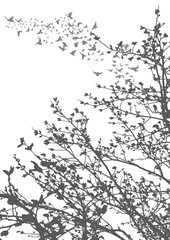 Vector, illustration, silhouette of flying birds and tree branches