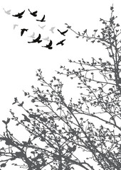silhouette of flying birds and tree branches