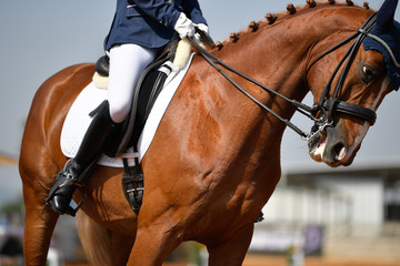 Close up on a bay horse with rider during a dressage competition