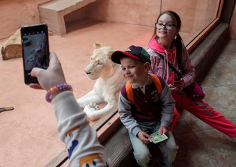 Visitors take pictures with white lioness in private zoo in Demydiv