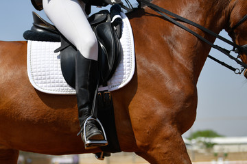 Close up on a horse with rider during a dressage competition