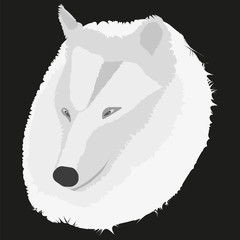 Vector image of a wolf on a black background