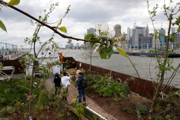 People stand on a floating barge, which is planted with fruit trees, as part of the Swale project called a collaborative floating forest, in the East River in the Brooklyn borough of New York