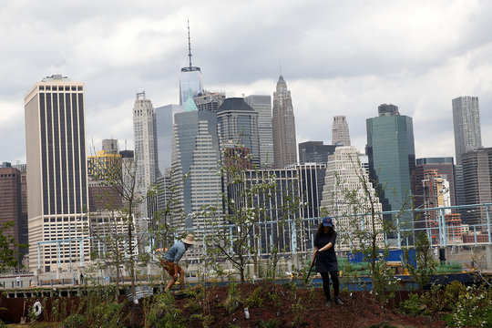 People work on a floating barge, which is planted with fruit trees, with the Manhattan skyline in the background, as part of the Swale project called a collaborative floating forest, in the East River in the Brooklyn borough of New York