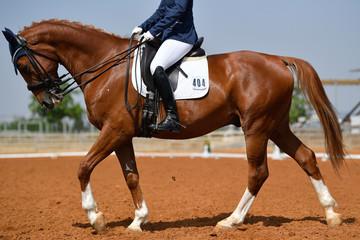 Dressage rider on a bay horse