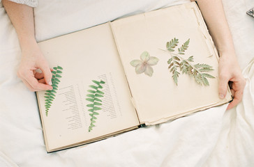 Person inserting leaves into book