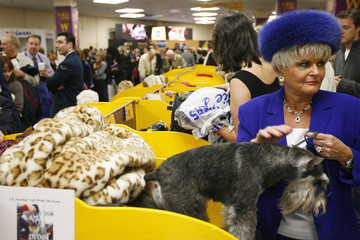 Geri Kelly stands with her Miniature Schnauzer, Buddy after showing during the 132nd Westminster Kennel Club Dog Show at Madison Square Garden in New York