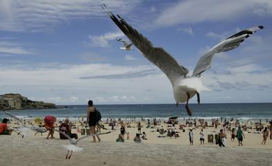 A seagull flies past beachgoers on Bondi Beach in Sydney