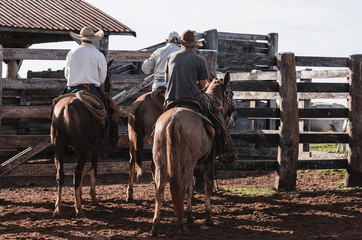 Three cowboys riding horses on a farm corral