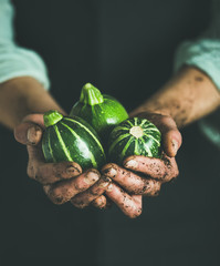 Man wearing black apron holding fresh seasonal green round zucchinis in his hands at local farmers market. Gardening, farming and natural food concept