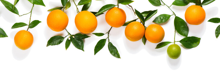 Branches with oranges.