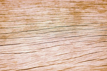 the wood bark texture backgrounds abstract