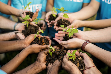 Group of environmental conservation people hands planting in aerial view Wall mural