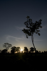 Trees silhouettes with sunrise background
