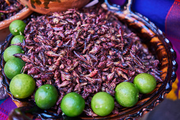 Eatable grasshoppers with lime, chapulin mexican food