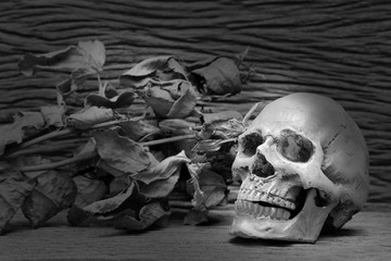 Old human skulls on pile of dried rose flower in dim light dark night on beautiful wooden table / Still life image, and adjustment black and white for background ,