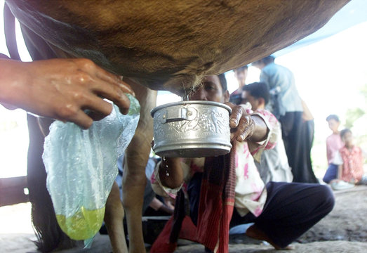 CAMBODIANS COLLECT URINE FROM AN ALLEGEDLY MAGIC COW IN KOMPOTPROVINCE.