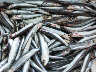 European anchovy in a seafood market