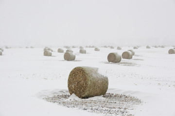 Bails of hay in blizzard