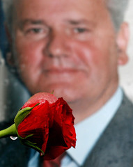 A red rose is seen in front of a picture of former Yugoslav president Slobodan Milosevic in Belgrade