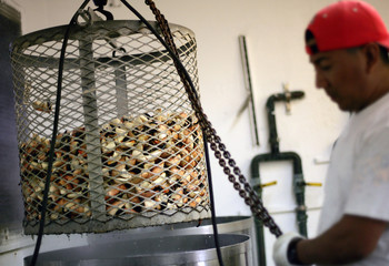 Worker cooks stone crab claws at a factory in Marathon in the Florida Keys