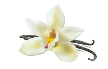 Vanilla flower 2 beans isolated on white background