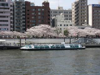 桜が咲く春の隅田公園と浅草乗船場の水上バス