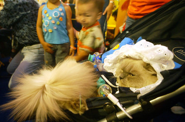 A PERSIAN CAT WEARS BABY CLOTHES DURING COSTUME COMPETITION IN JAKARTA.