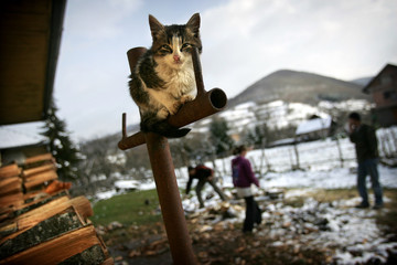 A cat rests as Bosnian Muslim refugees collect wood outside temporary home in village of Hrenovica