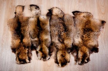 Skin of a raccoon dog