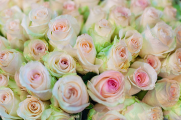 Huge bouquet of delicate beautiful roses close up