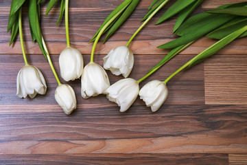 Seven fresh white tulips lying on wooden background. Beautiful cut flowers. Tender tulips. Free place for text, cope space.