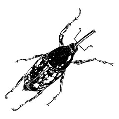 Insect or bug. Vintage old hand drawn stippling and hatching, shading style. Engraved stipple woodcut. Vector.